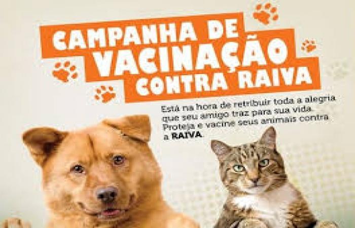 Campanha de Vacinação Antirrábica em cães e gatos deste ano vai de 19 a 28 de junho.